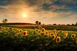 Shutterstock_152717195